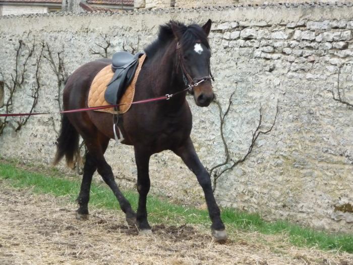 Mon petit élevage de chevaux de Pure Race Espagnole - Page 2 M_98592762_0