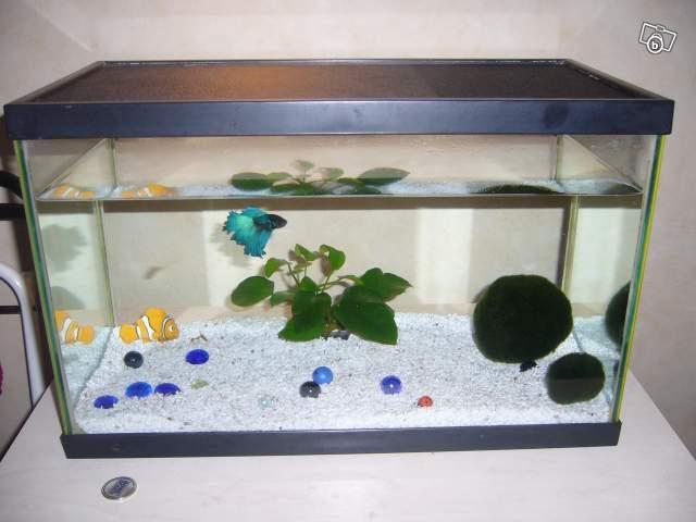 décoration aquarium pour poisson combattant