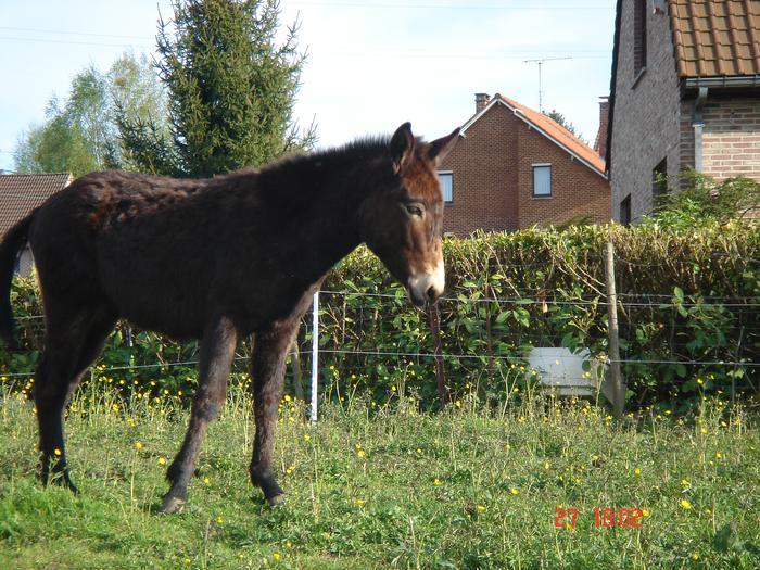 Ptit bonjour de Belgique M_149353361_0