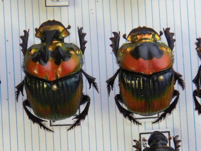 Présentation des collections Entomologiques M_214775549_0