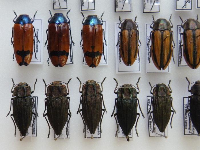 Présentation des collections Entomologiques M_214775590_0