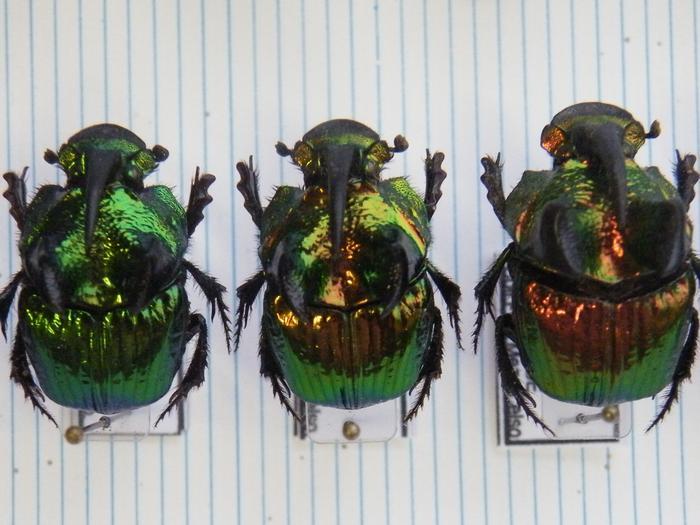Présentation des collections Entomologiques M_214775668_0
