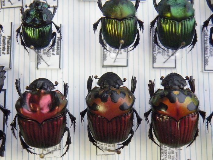 Présentation des collections Entomologiques M_214775703_0