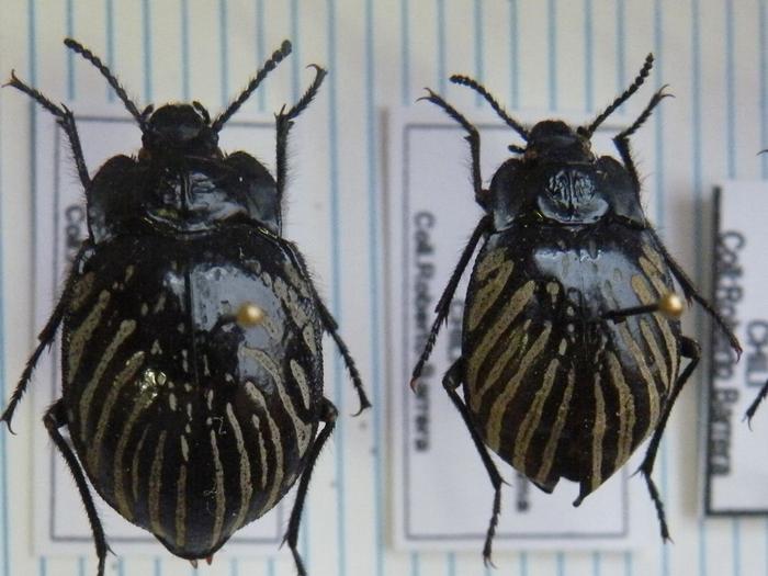 Présentation des collections Entomologiques M_214775770_0
