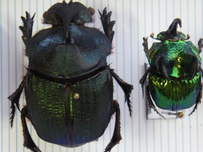 Présentation des collections Entomologiques M_214775827_0