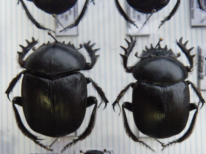 Présentation des collections Entomologiques M_214775903_0