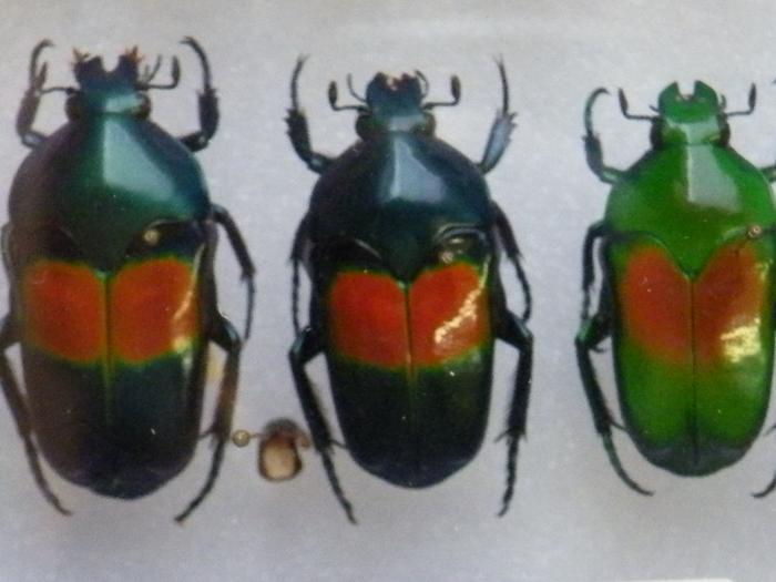 Présentation des collections Entomologiques M_214775957_0