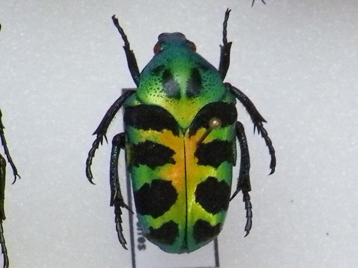 Présentation des collections Entomologiques M_214775992_0