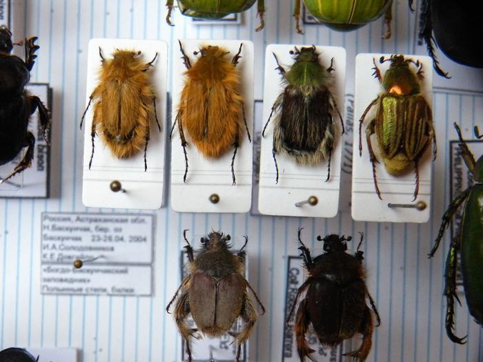 Présentation des collections Entomologiques - Page 2 M_215157077_0