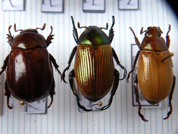 Présentation des collections Entomologiques - Page 2 M_215157156_0