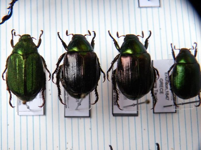 Présentation des collections Entomologiques - Page 2 M_215157229_0