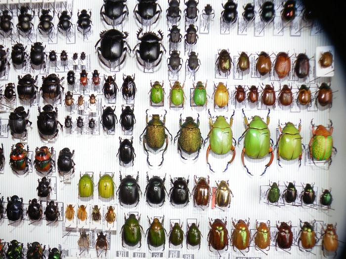 Présentation des collections Entomologiques - Page 2 M_215157409_0