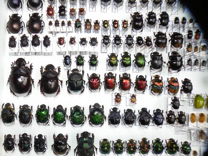 Présentation des collections Entomologiques - Page 2 M_215157467_0