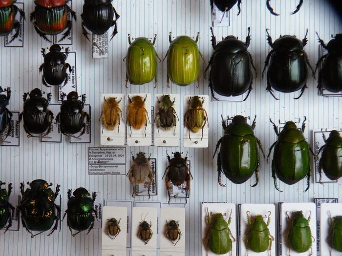 Présentation des collections Entomologiques - Page 2 M_215157585_0