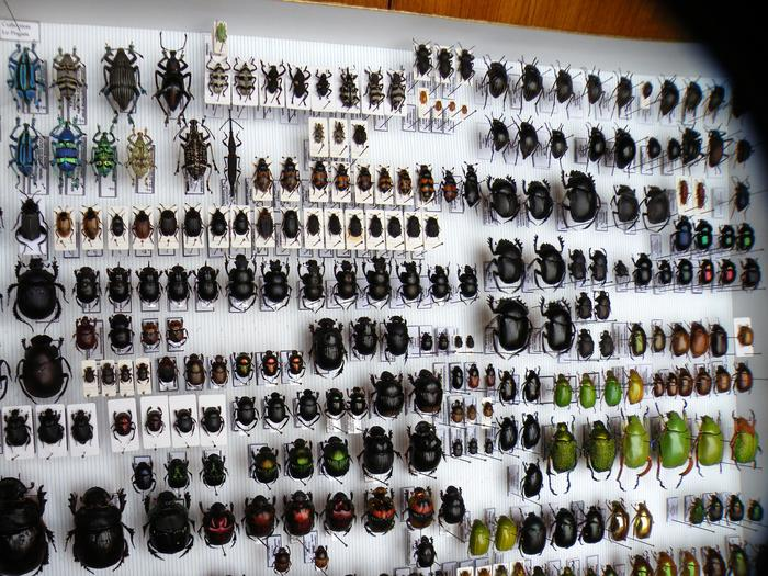 Présentation des collections Entomologiques - Page 2 M_215157636_0
