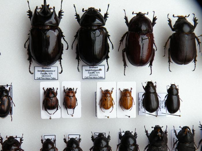 Présentation des collections Entomologiques - Page 2 M_215157783_0