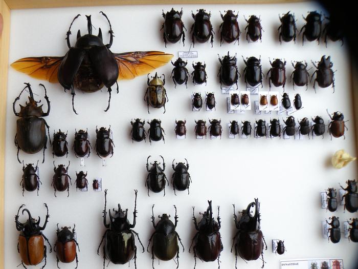 Présentation des collections Entomologiques - Page 2 M_215159698_0