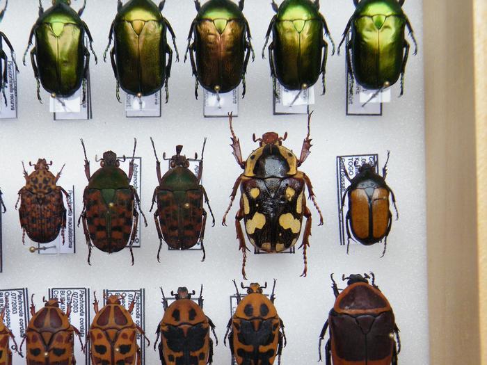 Présentation des collections Entomologiques - Page 2 M_215210246_0
