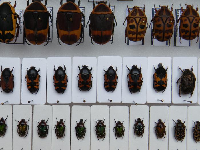 Présentation des collections Entomologiques - Page 2 M_215210343_0
