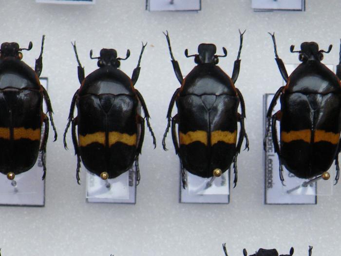 Présentation des collections Entomologiques - Page 2 M_215210422_0