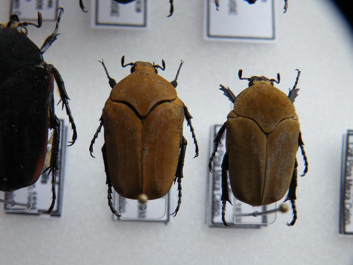 Présentation des collections Entomologiques - Page 2 M_215210540_0
