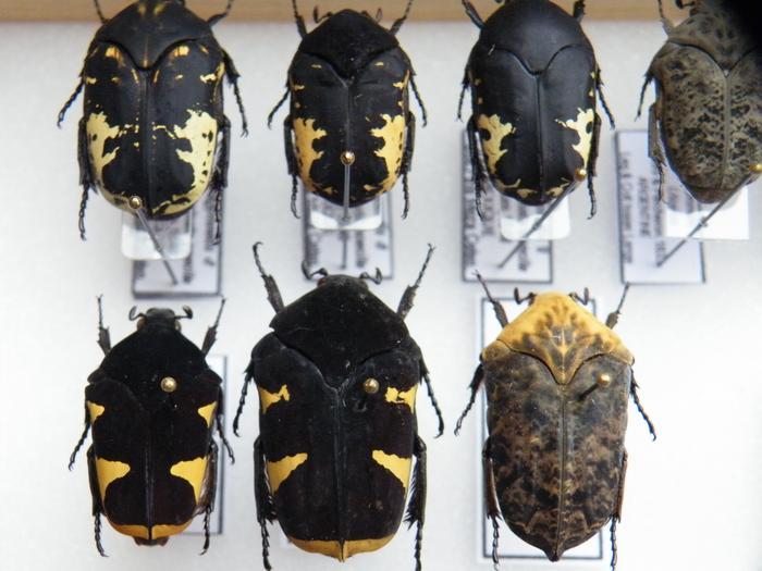 Présentation des collections Entomologiques - Page 2 M_215210748_0