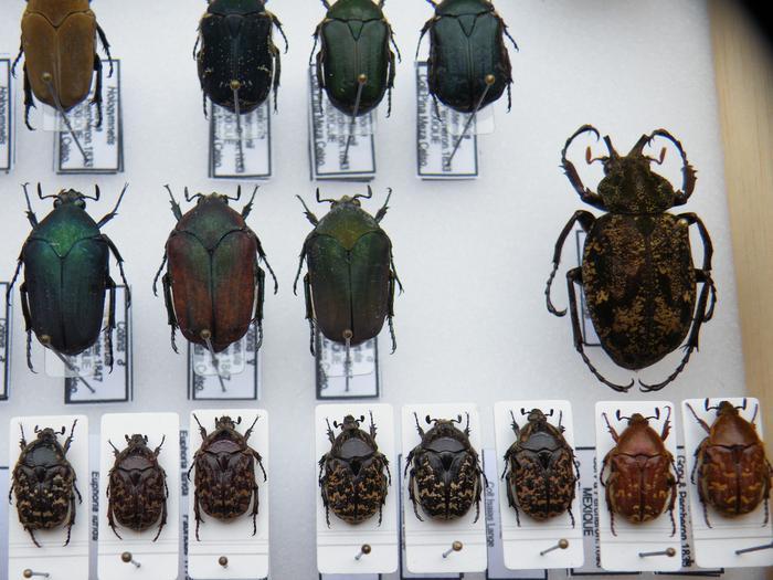 Présentation des collections Entomologiques - Page 2 M_215210854_0