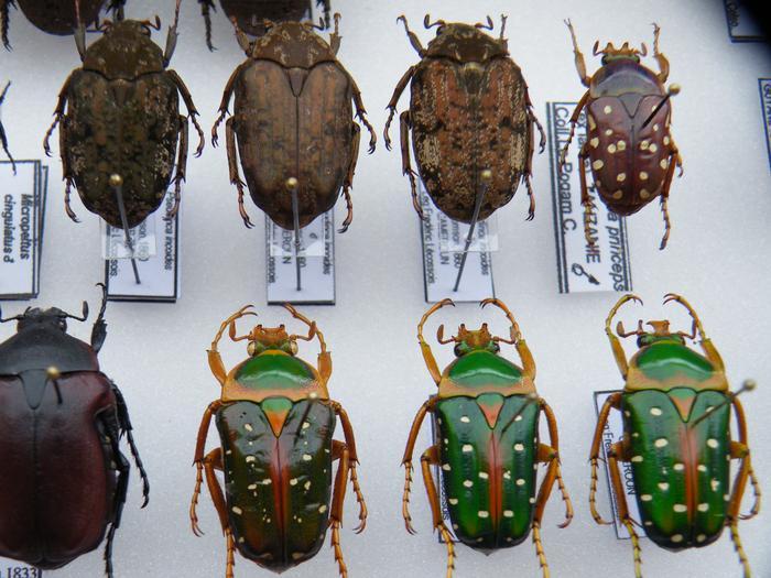 Présentation des collections Entomologiques - Page 2 M_215210971_0