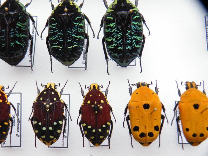 Présentation des collections Entomologiques - Page 2 M_215211078_0