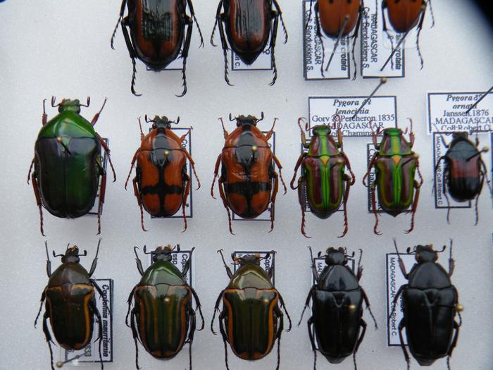 Présentation des collections Entomologiques - Page 2 M_215211305_0