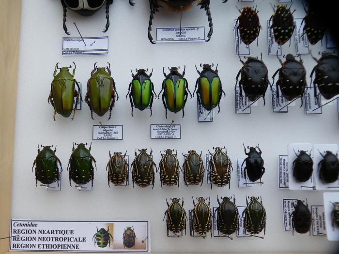 Présentation des collections Entomologiques - Page 2 M_215211536_0