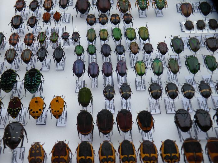 Présentation des collections Entomologiques - Page 2 M_215211637_0