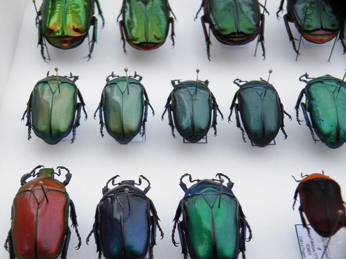 Présentation des collections Entomologiques - Page 2 M_215211724_0