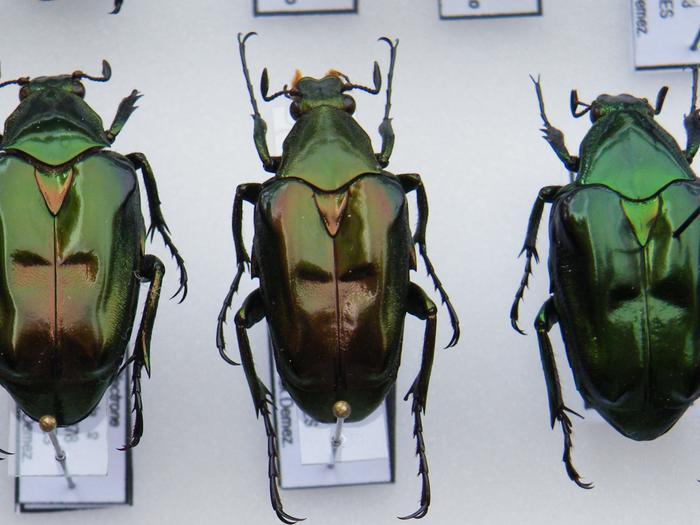 Présentation des collections Entomologiques - Page 2 M_215211842_0