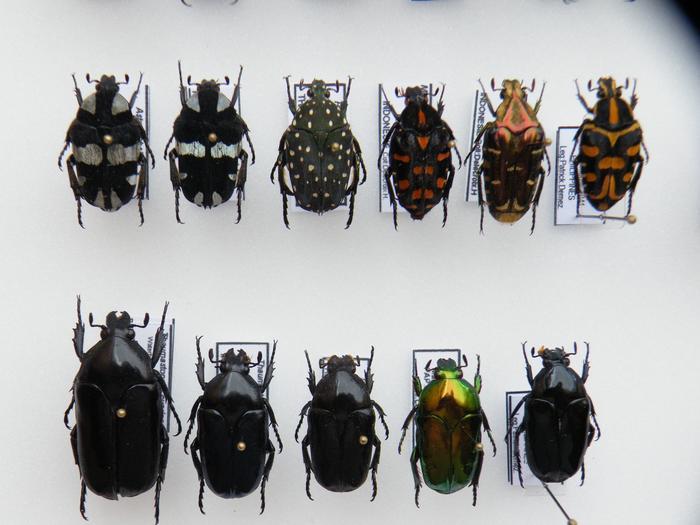 Présentation des collections Entomologiques - Page 2 M_215212164_0
