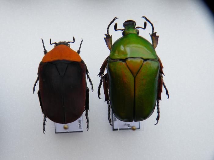 Présentation des collections Entomologiques - Page 2 M_215212283_0