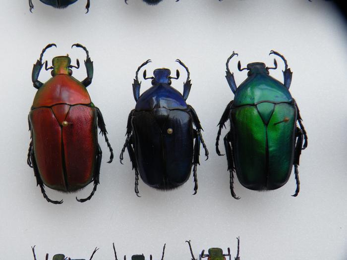 Présentation des collections Entomologiques - Page 2 M_215212360_0