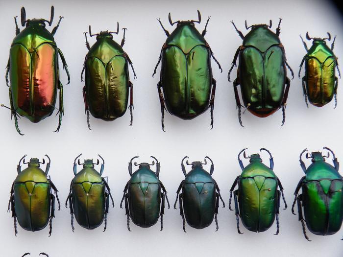 Présentation des collections Entomologiques - Page 2 M_215212458_0