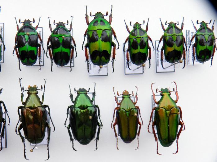 Présentation des collections Entomologiques - Page 2 M_215305779_0