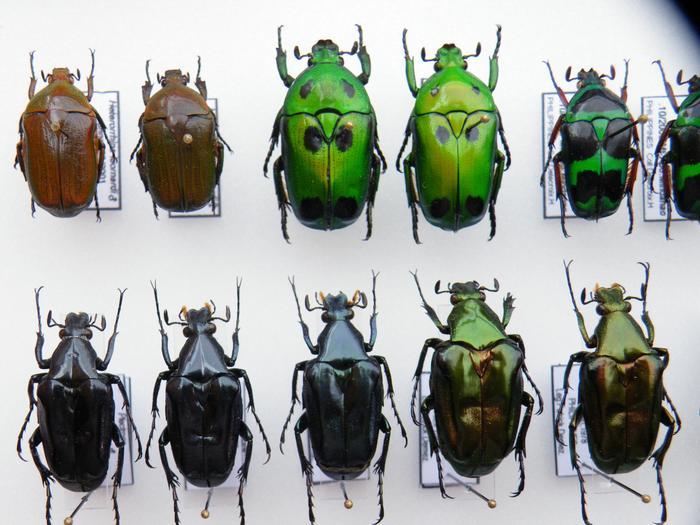 Présentation des collections Entomologiques - Page 2 M_215305828_0