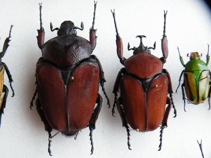 Présentation des collections Entomologiques - Page 2 M_215311843_0