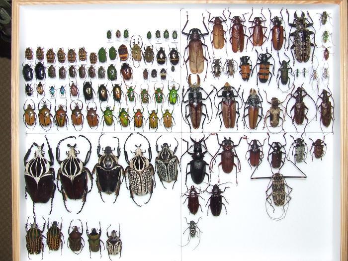 Présentation des collections Entomologiques M_214814331_0