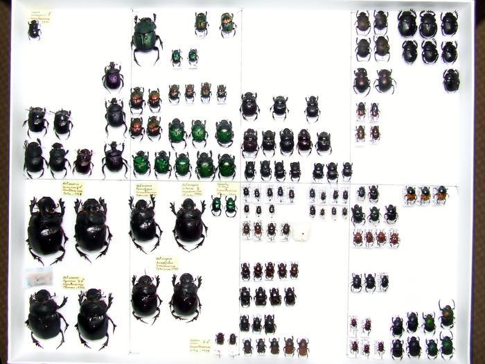 Présentation des collections Entomologiques M_214814364_0