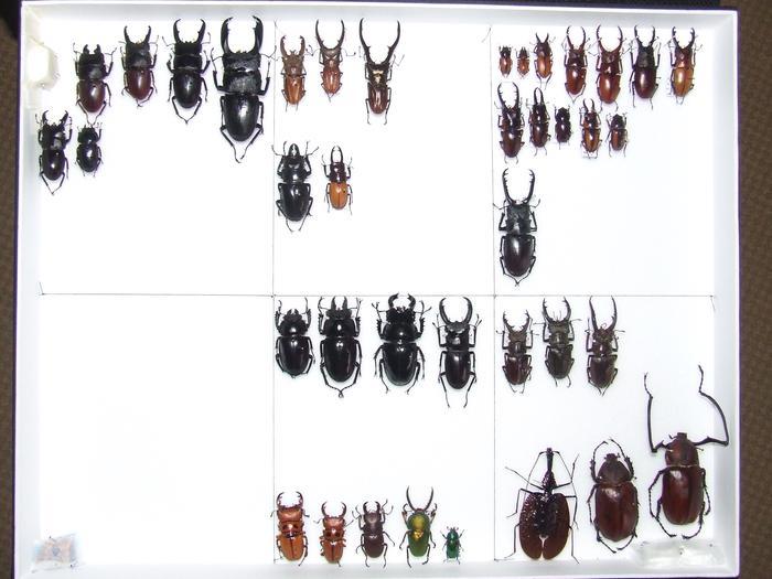Présentation des collections Entomologiques M_214814469_0