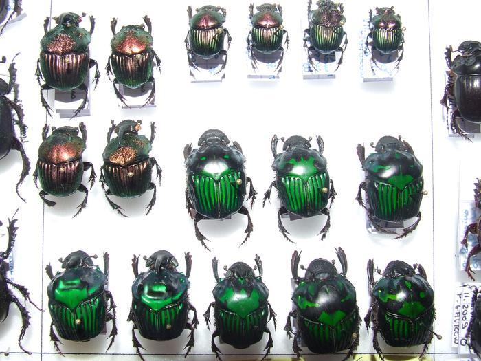 Présentation des collections Entomologiques M_214815783_0