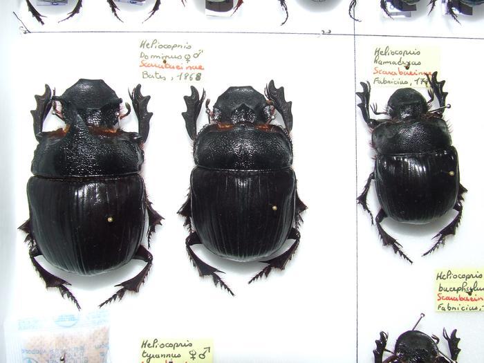 Présentation des collections Entomologiques M_214815806_0