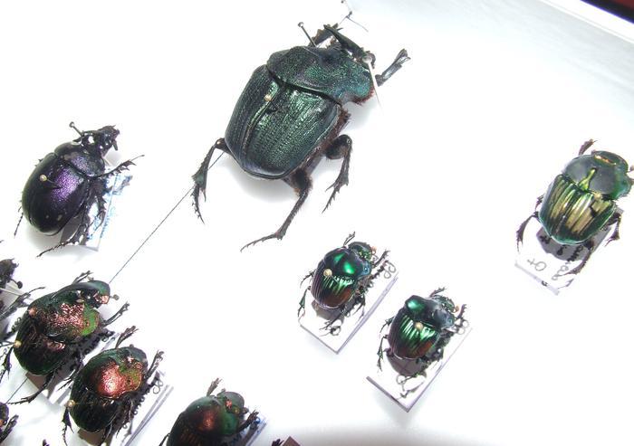Présentation des collections Entomologiques M_214815827_0