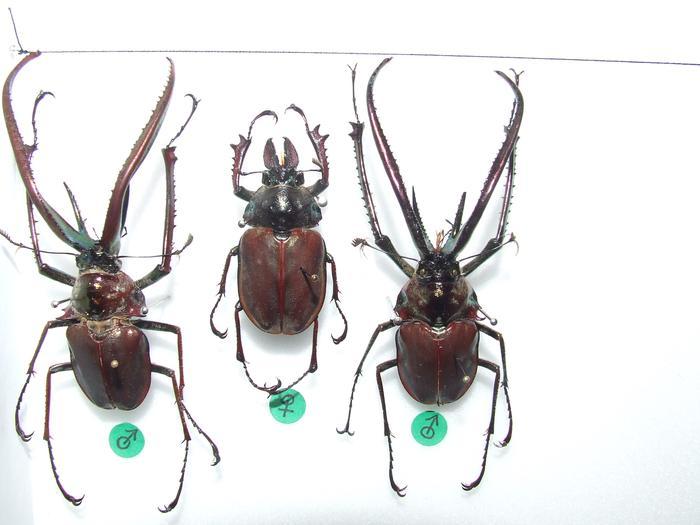 Présentation des collections Entomologiques M_214815851_0