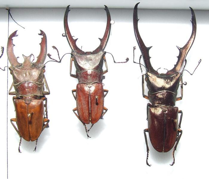 Présentation des collections Entomologiques M_214815866_0