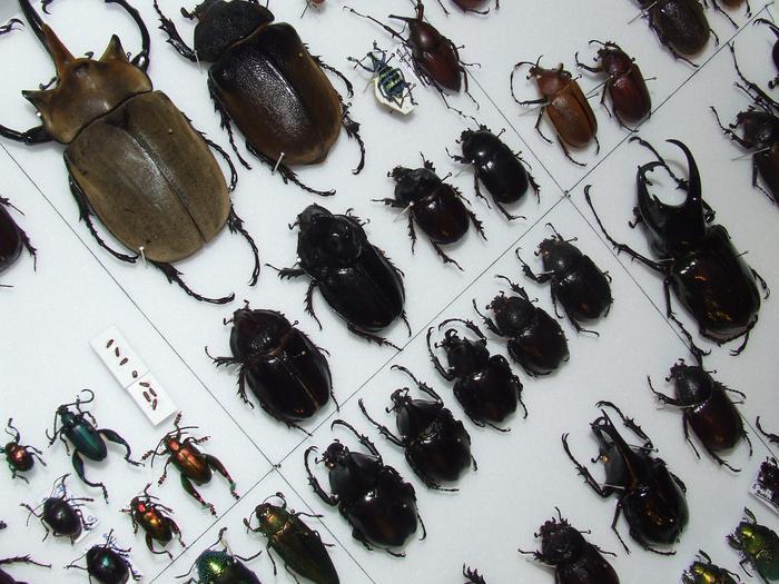 Présentation des collections Entomologiques - Page 2 M_215435074_0